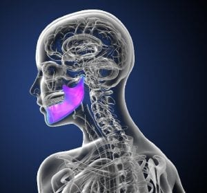 Rendering of Facial Skeleton With Jaw Shown in Purple